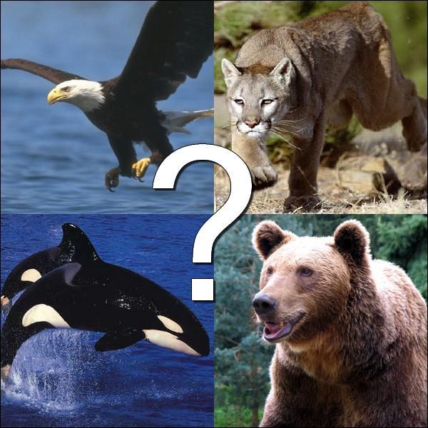 Quel animal est le symbole de l'Etat ?