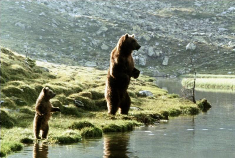 """Voilà deux Fozzies rois de la nature et de la liberté, et stars pour Jean-Jacques Annaud, dans le film """"L'ours"""". Quels sont les prénoms donnés à l'ours kodiak qui guide l'ourson et à l'ourson qui s'attache à lui ?"""