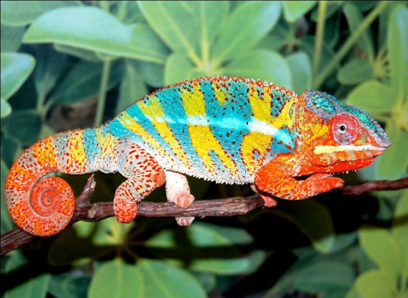 Madalove et Garry, ont pris le même avion ! Ils ont rapporté un animal emblématique de Madagascar !