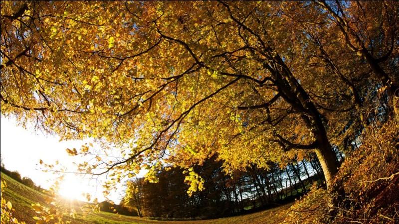 L' ... est une des saisons les plus colorées.