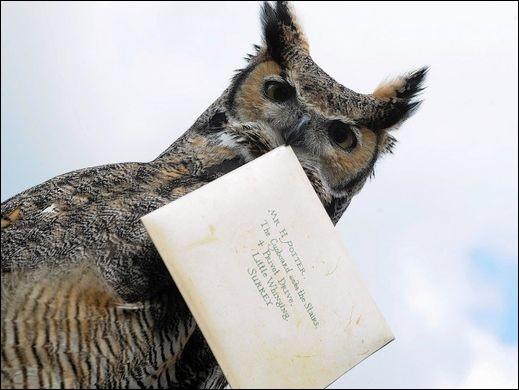 Combien de Noises Harry donne-t-il au hibou qui apporte le journal à Hagrid ?