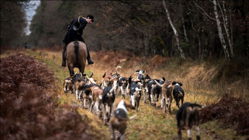 Quel mode de chasse était surtout pratiqué par les châtelains ?