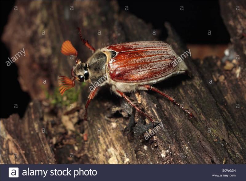 Substance organique azotée de la cuticule des insectes, arachnides et crustacés !