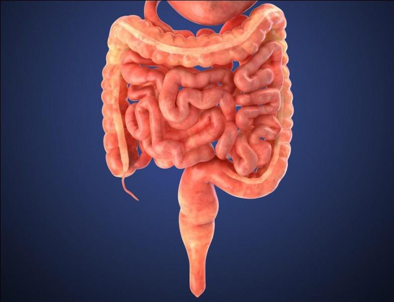 Sciences de la vie et de la Terre : Quelle est la longueur de l'intestin chez un homme adulte ?