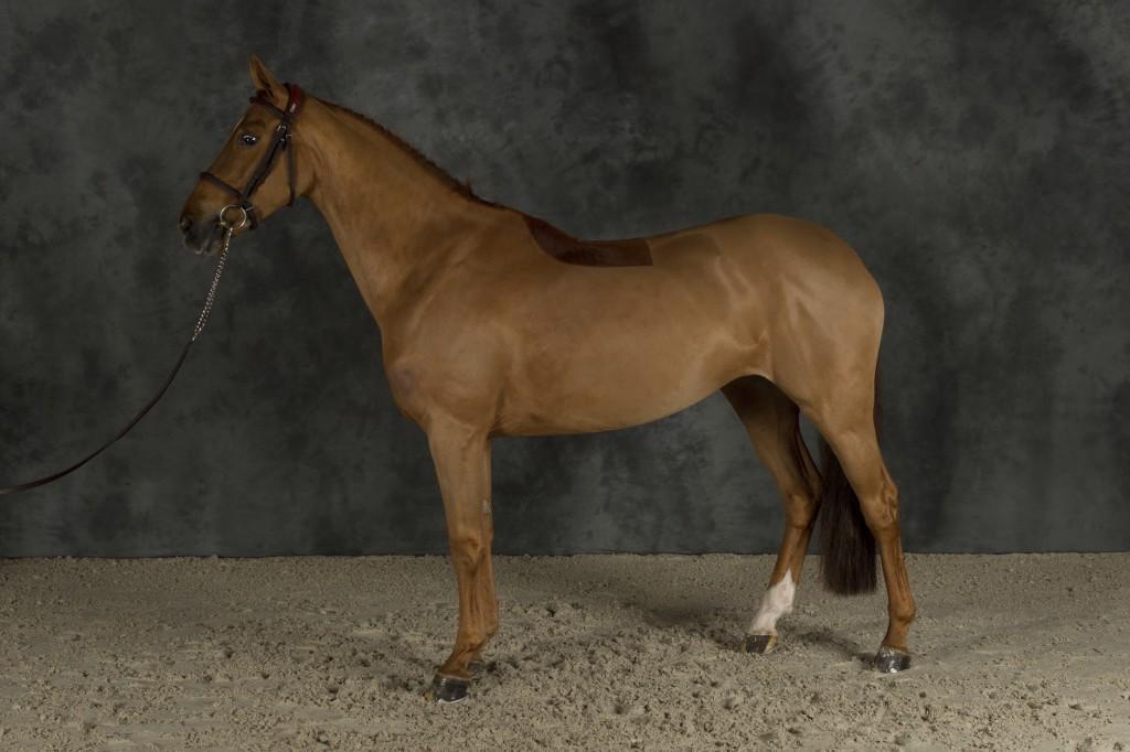 Connais-tu vraiment les chevaux célèbres ? (2)