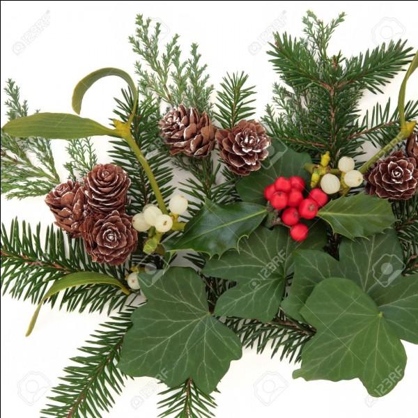 La tradition veut que l'on s'embrasse en dessous lors des fêtes. Quelle est cette plante ?