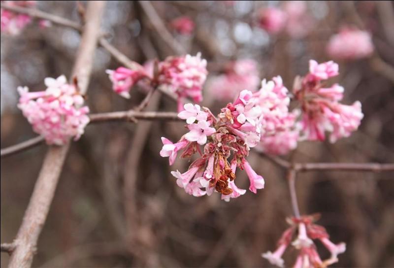 Un air de douceur, un souffle de vent suave et un rayon de soleil, et voilà que fleurit la délicate [...].