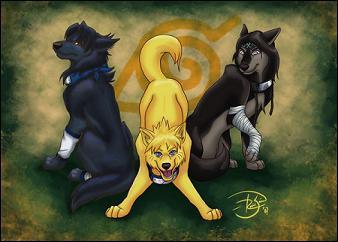 Qui sont ces ninjas représentés sous la forme de loups?