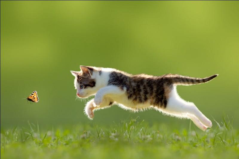 Quelle est la vitesse moyenne du chat ?