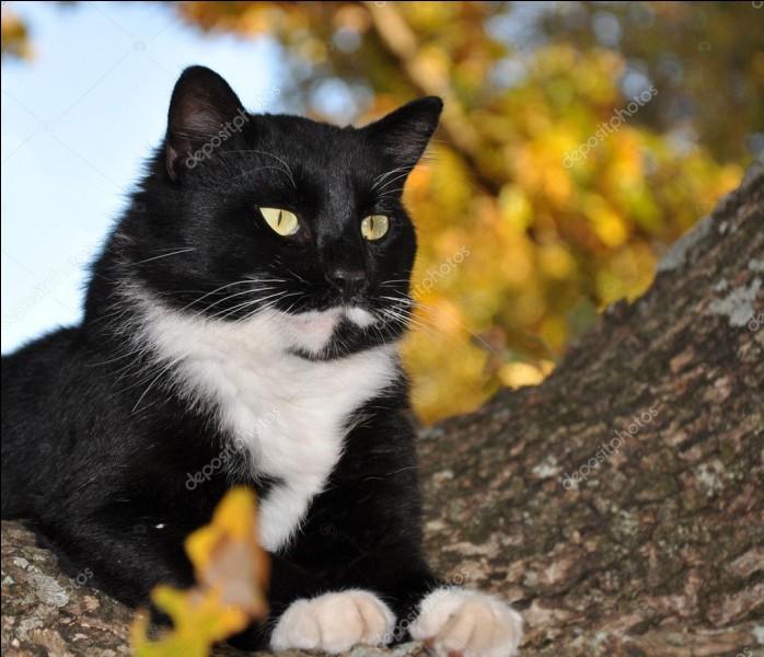 Les chats hérissent leurs poils uniquement lorsqu'ils sont en colère.