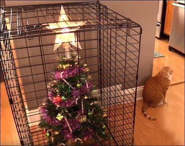 """Mais quelle idée ! A votre avis, pourquoi cette """"cage"""" ou """"grille"""" de sapin ?"""