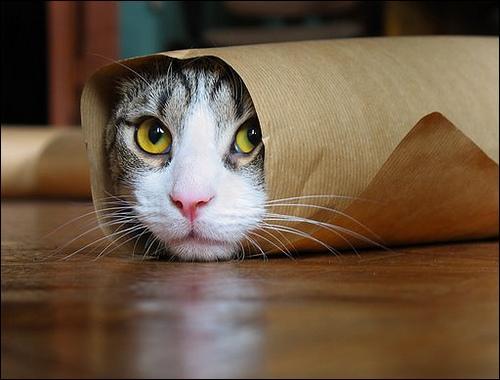 Dans quoi est ce chat ?