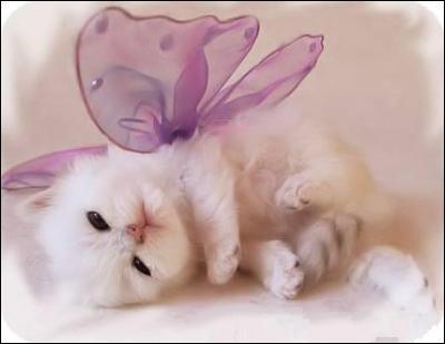 Qu'a ce petit chat sur son dos ?