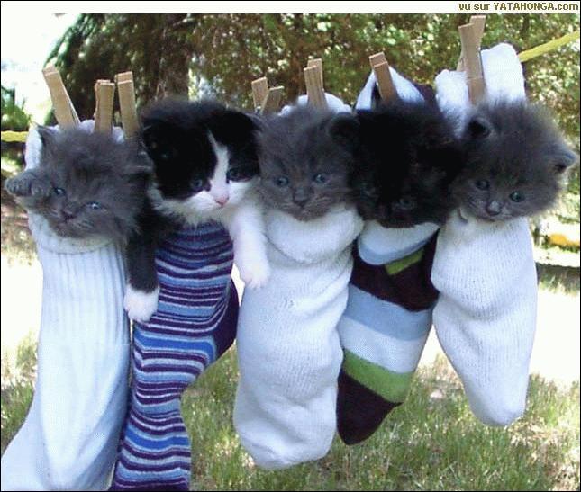 Dans quoi sont ces chats ?