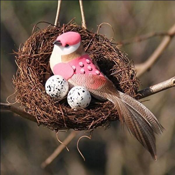 Quel adjectif qualifie un oiseau dont les petits quittent le nid peu après la naissance ?