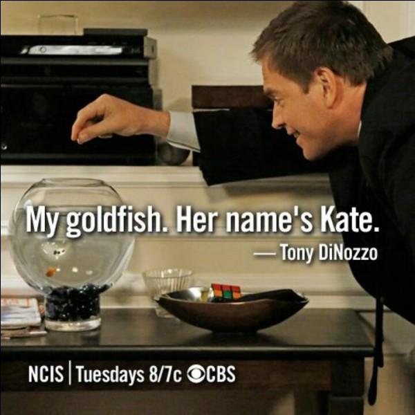 """Dans """"Le baiser du tueur"""" (saison 2, épisode 22) que fait Tony pour énerver Kate ?"""