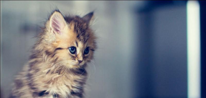 Quels noms préfères-tu parmi ceux-là, si tu devais en choisir pour des chatons ?