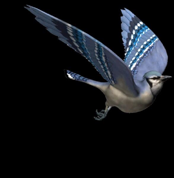 Quel est ton oiseau préféré ?
