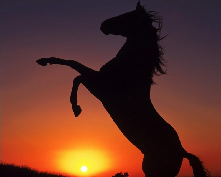 Quand le cheval a une colique, il est important de le faire marcher.