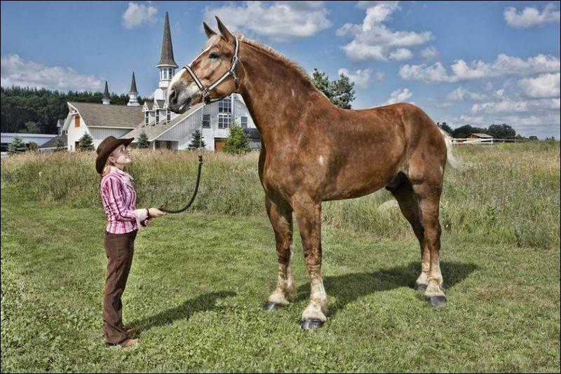 Quelle est la masse de Big Jake, le plus grand cheval du monde ?