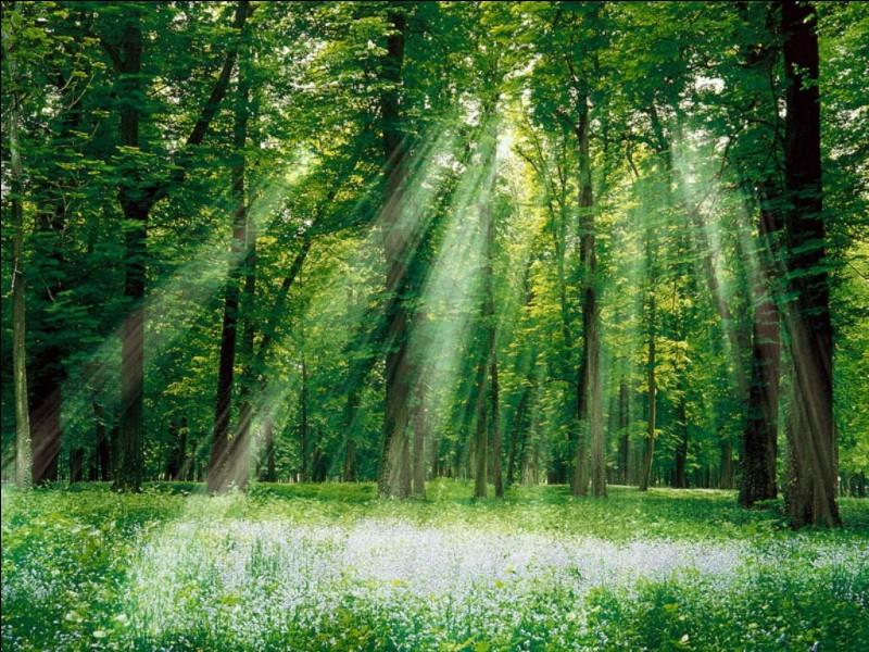 """Le repas est fini. """"On va faire une randonnée en forêt"""". Quelle est ta réaction ?"""