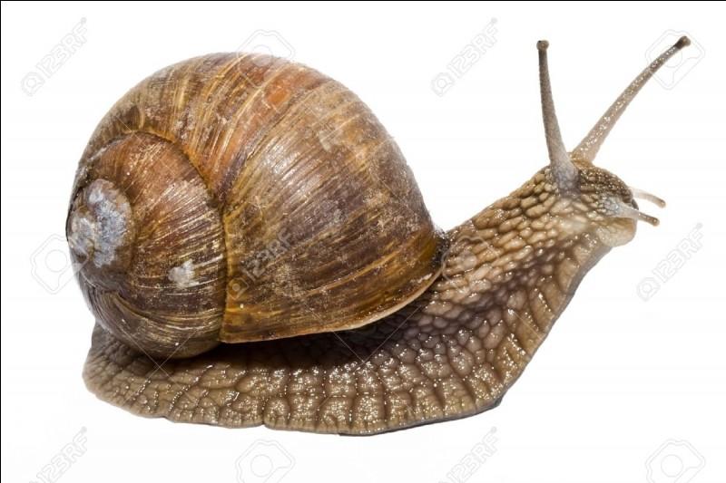 Quelle distance les escargots parcourent-ils en une heure ?