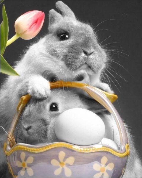 En Angleterre c'est Easter Bunny qui est chargé de les apporter !