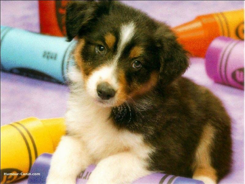 L'espérance de vie d'un chien est de :