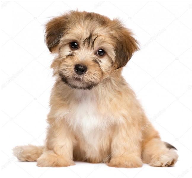 Combien d'années y a-t-il depuis l'apparition du premier chien ?