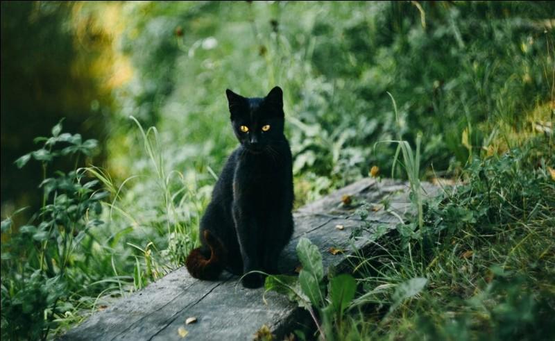 """Comment dit-on """"chat noir"""" en anglais ?"""