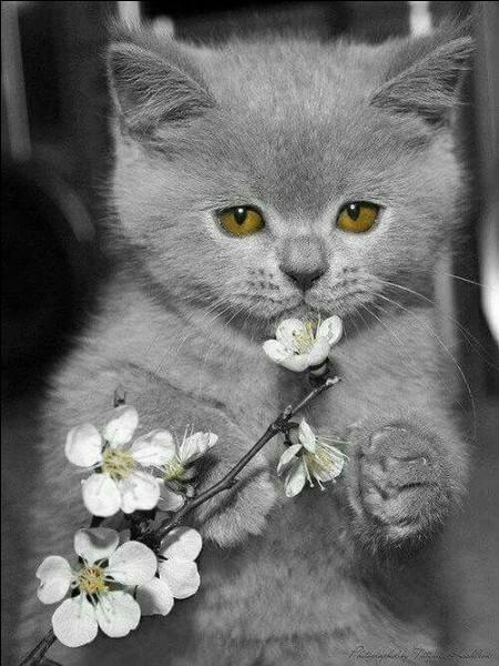 La photo est uniquement décorative. Qu'est-ce qu'un chat haret ?
