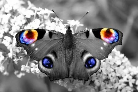 """Qui a composé l'Opéra """"Madame Butterfly"""" ?"""