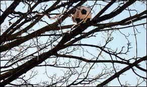 Tu es en train de lire ton livre mais quelqu'un t'appelle pour te demander de l'aider à attraper le ballon qui est coincé dans l'arbre. Que fais-tu ?