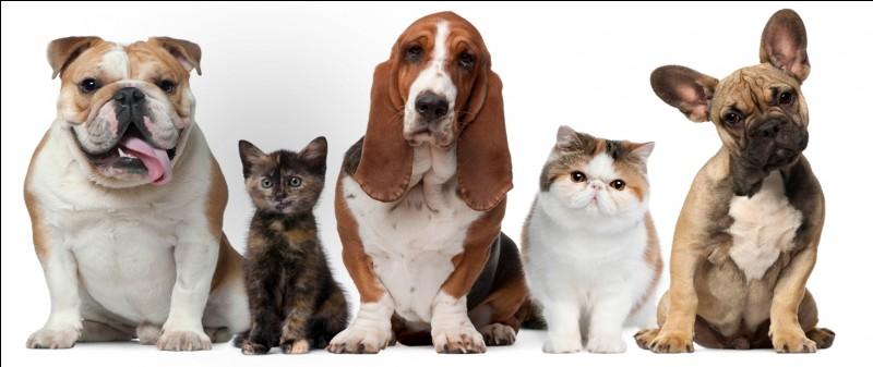 Préfères-tu un animal facile à entretenir ou un animal qui demande beaucoup de temps ?