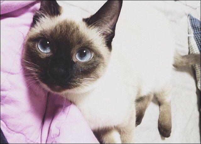 Quel est le nom de ce chat ?