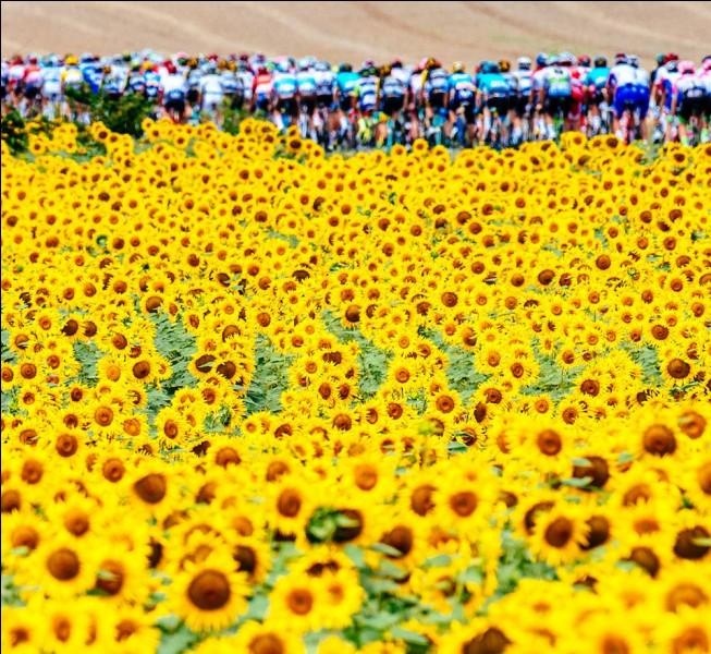 Passons au Tour de France et commençons par les sprints et les étapes de transition. Lequel de ces coureurs a remporté le plus d'étapes sur cette Grande Boucle ?