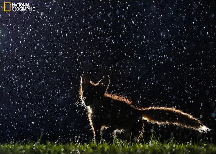Cette belle photo nous permet d'en voir un sous la pluie : ce n'est pas qu'il aime vraiment la pluie mais l'été, quand il fait bien chaud et qu'un orage éclate, on peut en voir juste après, comme regaillardi.Quel est le nom de cet animal qui danse sous la pluie ?Dancing in the Rain : Vladislav Kamenski, 2016 National Geographic Nature Photographer of the Year.