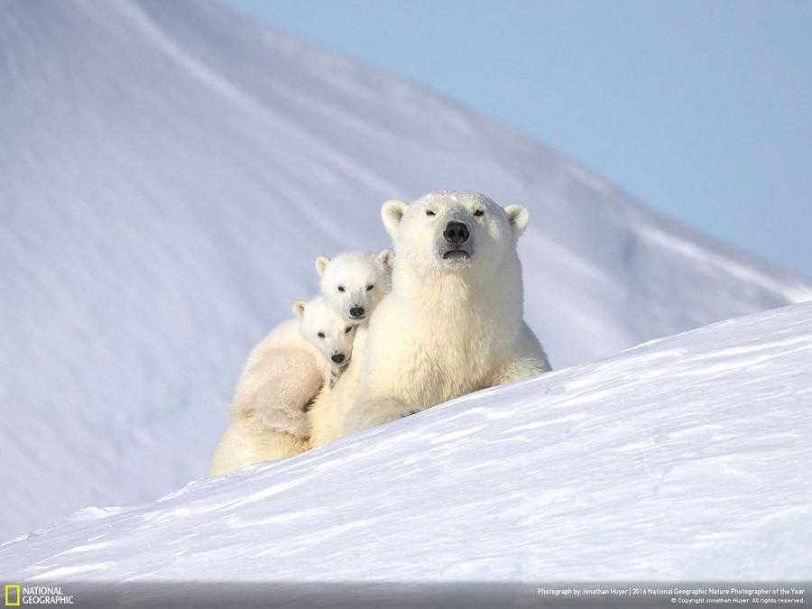 Photos d'animaux de la National Geographic