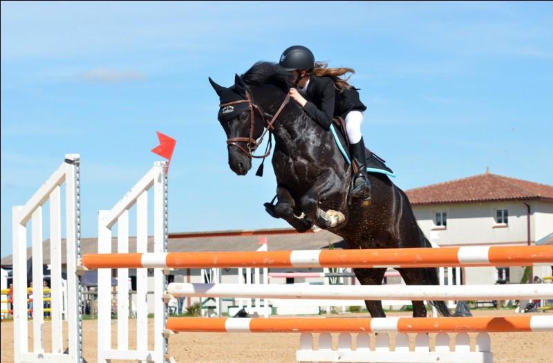 La plupart des chevaux partent au galop à chaque fois qu'ils sautent des obstacles, même des croisillons.