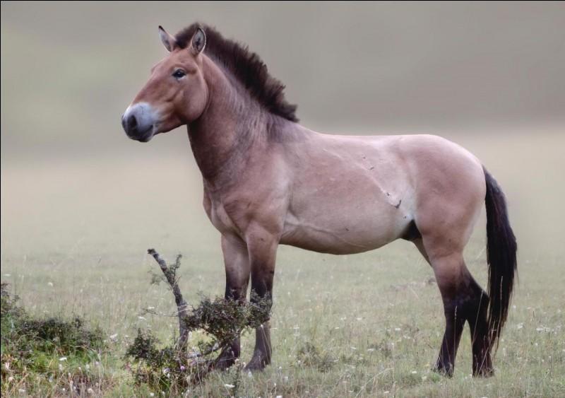 Vu que le cheval a une crinière, cela veut-il dire qu'il est de la même famille du lion :