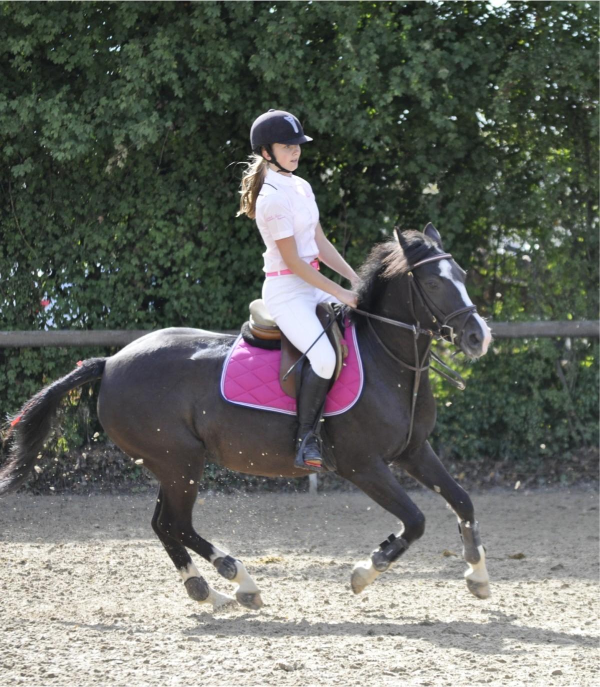 Le matériel d'équitation - 2