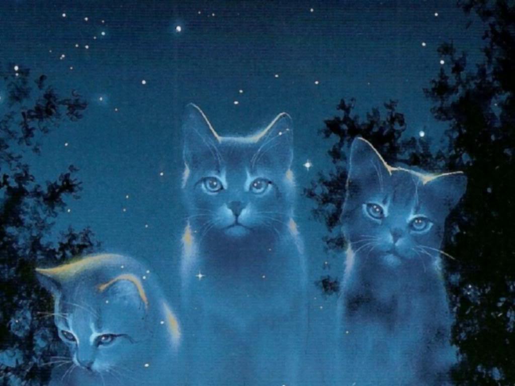 LGDC - Les chats morts trop tôt