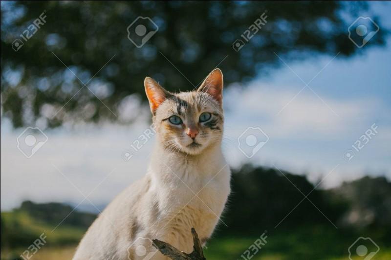 Quand a lieu la journée mondiale du chat ?