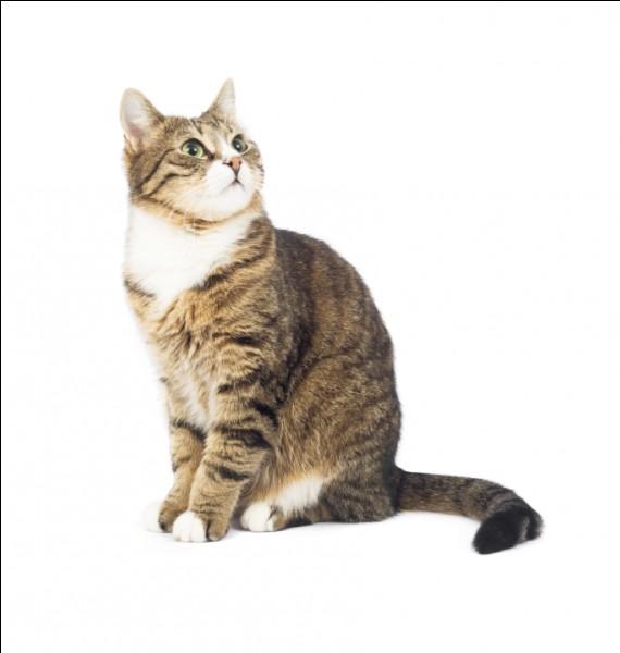Le chat est ...