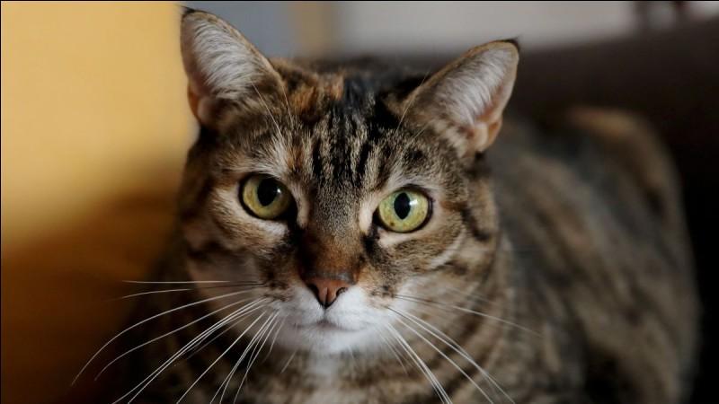 Combien y a-t-il de chats en France ?