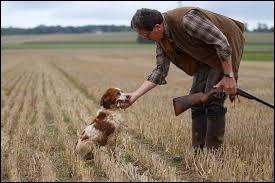 Lequel de ces chiens n'est pas utilisé pour la chasse ?