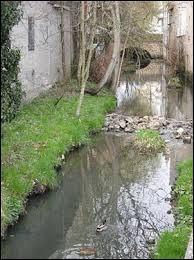 De quel cours d'eau la Nièvre est-elle un affluent ?