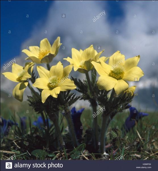 Dans quel but beaucoup de fleurs sont-elles très colorées ?