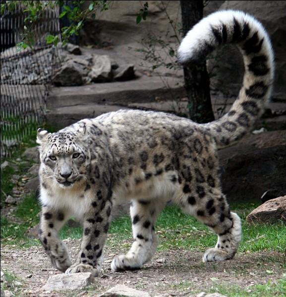 Dans quel habitat un animal ayant un pelage épais et chaud peut-il vivre ?