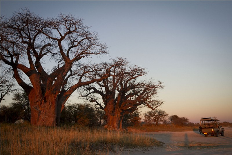 Qu'est le baobab, que l'on retrouve dans une grande partie de l'Afrique de l'Ouest ?